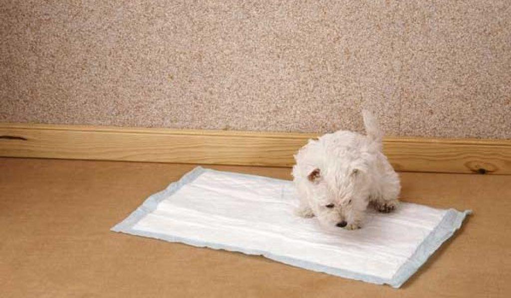 tapis proprete canine