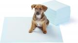 Tapis éducateur pour chien : Guide d'achat complet et détaillé
